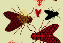 Das Muster wird über den Schattenriss einer Stubenfliege gelegt